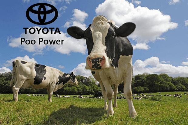 Toyota will power hydrogen and electric cars by cow dung from 2020