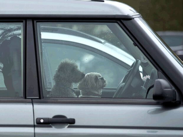 What should you do when you see a dog in a hot car?