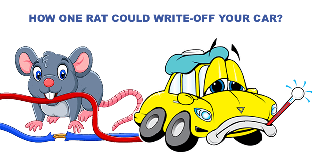 HOW ONE RAT COULD WRITE-OFF YOUR CAR?