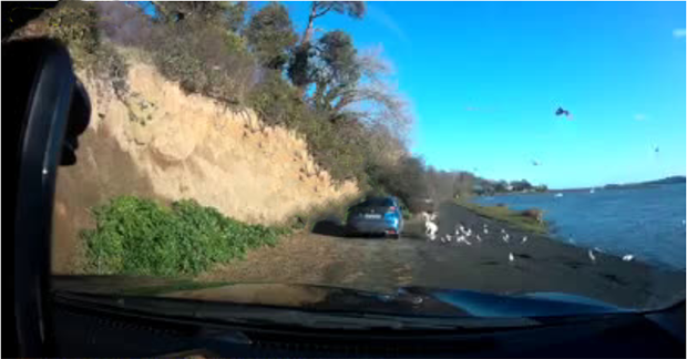 Dublin motorist caught on camera ploughing through a flock of birds and driving over a swan